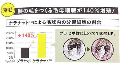 髪の毛を作る孟母細胞が140%増加